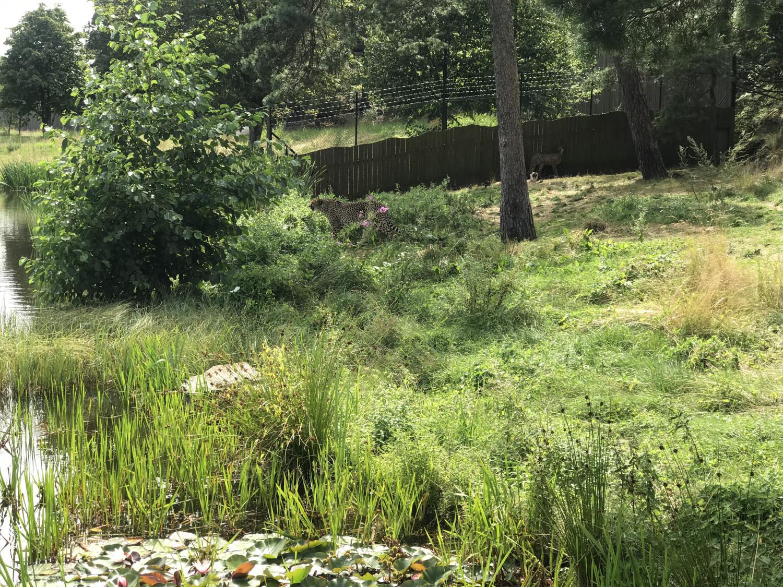 dyreparken-annemette-voss-26